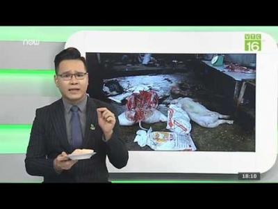 GCAECO - Tận thấy những kẻ vô lương 'hóa phép' lợn chết thành lợn gác bếp