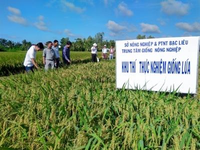 Chọn tạo giống lúa thích ứng biến đổi khí hậu