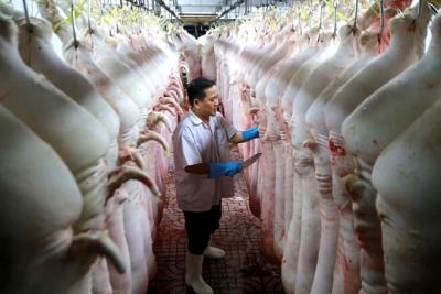 Giá heo hơi tăng liên tục, Bộ Nông nghiệp yêu cầu doanh nghiệp, hộ nuôi không găm hàng làm giá, nghiêm cấm bán heo qua Trung Quốc