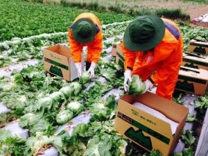 Sự phát triển vượt bậc và đặc trưng nền nông nghiệp của Nhật Bản