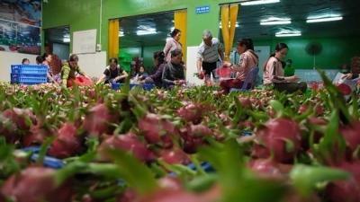 Corona tác động tiêu cực đến xuất khẩu nông sản