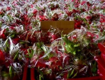Dịch Corona: Kết nối siêu thị hỗ trợ tiêu thụ thanh long Bình Thuận