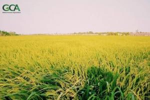 Đánh giá lại vì sao vẫn còn đất nông nghiệp bị bỏ hoang