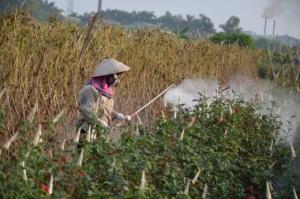 Lần đầu tiên xử phạt nông dân dùng thuốc BVTV lậu