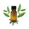 Tinh dầu Long Não - nguyên chất - Camphor essential Oil(10ml)