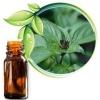 Tinh dầu Húng Quế - nguyên chất - Basil essential oil(10ml)