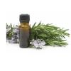 Tinh dầu Tràm Gió - nguyên chất - Cajeput essential oil(10ml)