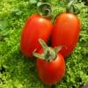 Cà chua cherry V-Organic