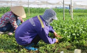 Sản xuất công nghệ cao thích ứng biến đổi khí hậu: Hướng mới cho nông nghiệp Thủ đô