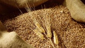Đề xuất giảm thuế nhập khẩu lúa mỳ về 0%, ngô 3%
