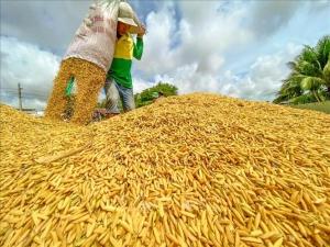 Người tiêu dùng Chủ động cắt giảm chi phí sản xuất lúa gạo