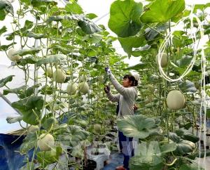 An Giang kết nối, tiêu thụ nông sản trong mùa dịch