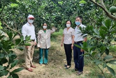 Ngăn chặn nông sản kém chất lượng