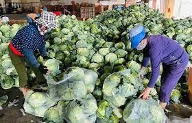 Dịch COVID-19: Đánh giá việc sản xuất nông sản tại các địa phương phía Nam