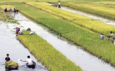 Tài chính nông nghiệp - nông thôn: Hướng đến sự bền vững tài chính cho người nghèo