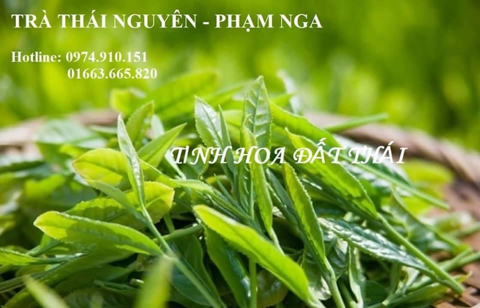 Trà búp Phạm Nga