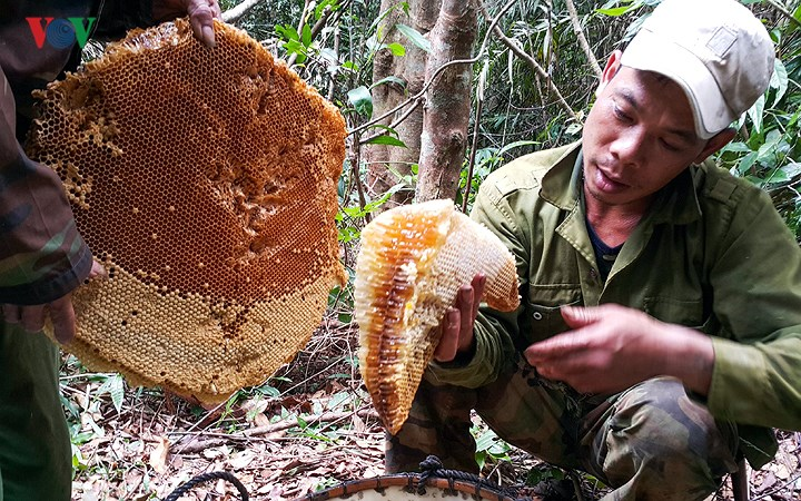Mật ong rừng nguyên chất B'Lao Green