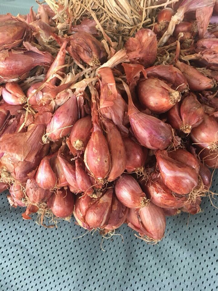 Hành tỏi giống - Ninh Thuận