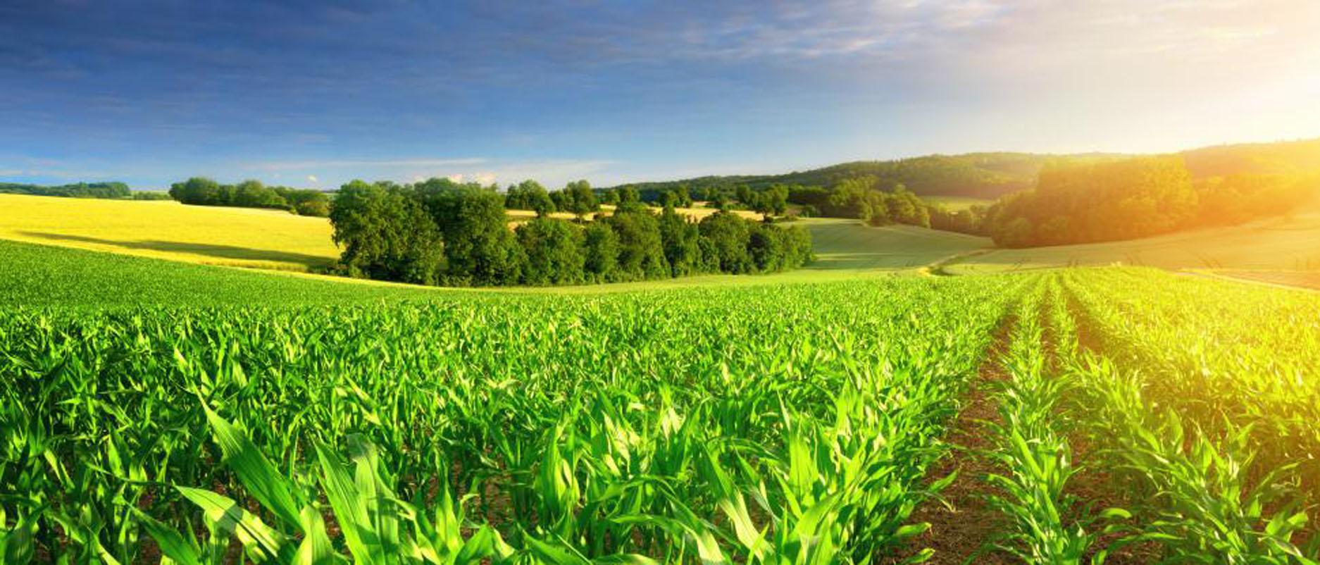 Công ty Cổ phần Nông nghiệp Thế hệ mới