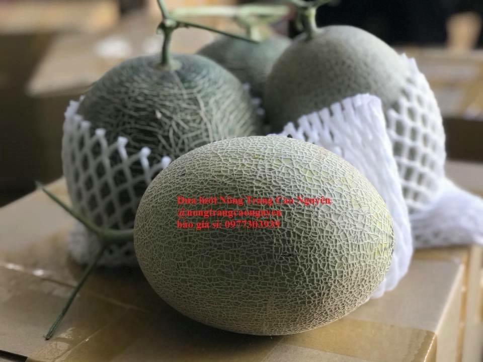 Dưa lưới vietgap NT Cao Nguyên  Bình Phước