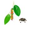 Hạt tiêu ngon Phú Mỹ