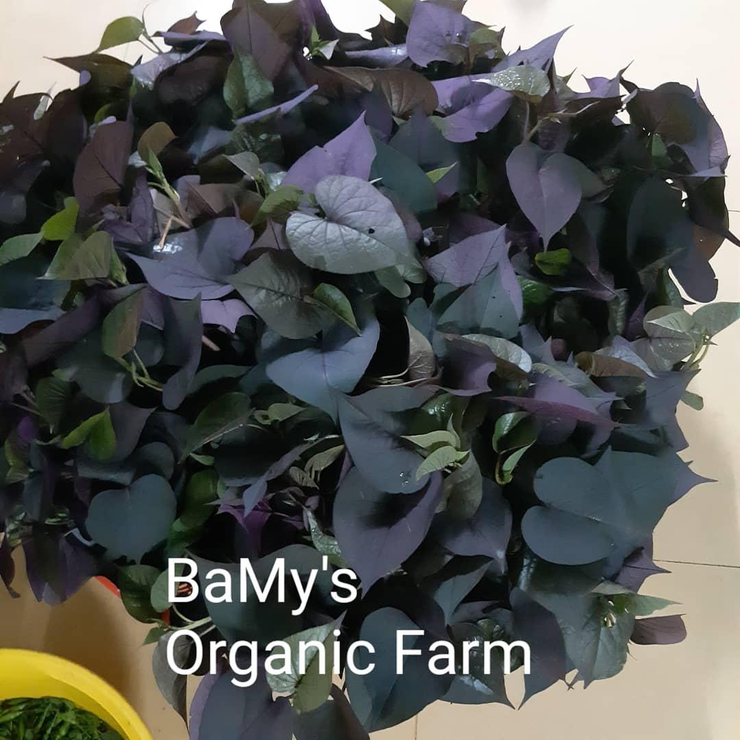 BaMy's Organic Farm