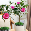 Hoa giống HVNNVN