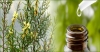 Tinh dầu Tràm Trà - Nguyên chất – Tea Tree Essential Oil(10ml)