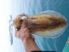 Mực Lá Sạch Biển Long Hải