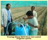 Phân bón hữu cơ Eco-Grow - Sản phẩm thân thiện với môi trường đến từ New Zealand