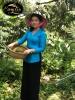 Sầu Riêng Mõn Thon