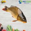 Cá Chép Sông Đà từ 3kg đến <5kg