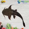 Cá Chiên Sông Đà từ 1kg đến <2kg