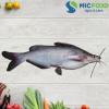 Cá ngạnh Sông Đà từ 0,5kg đến <1kg