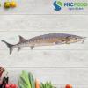 Cá Tầm Sông Đà từ 2kg đến <4kg