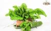 Rau cải xanh hữu cơ V-Organic