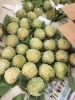 Na Dai Chi Lăng Loại 3 (6-7 quả/kg)  - HTX Nông Nghiệp Chi Lăng