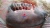Thịt Lợn Rừng F1 (Thuần Chủng) - Trang Trại NTC