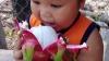Thanh Long - Hòa Bình