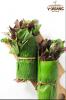Rau dền hữu cơ V-Organic