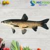 Cá trắm đen Sông Đà từ 7kg đến <9kg | Micfood.vn
