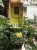 Túi Trà xanh Oolong Tam đường HCK 100gr