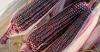 Ngô Tím (Bắp nữ hoàng đỏ) - 50 hạt