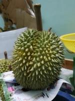Sầu Riêng Ri6
