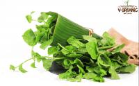 Rau mồng tơi hữu cơ V-Organic