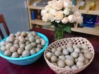 Trứng chim trĩ